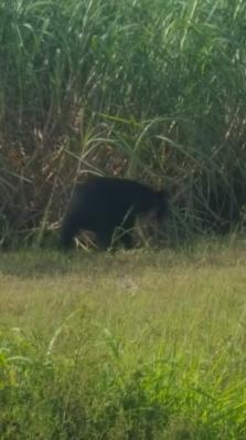 bear 9 5 17 2