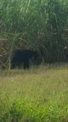 bear 9 5 17 3