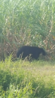 bear 9 5 17