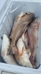 1 2018 5 5 capt brians charter w ms josey and crew 4