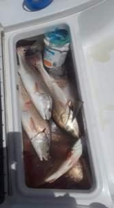1 2016-18 6 29 FISHING IRGC 11